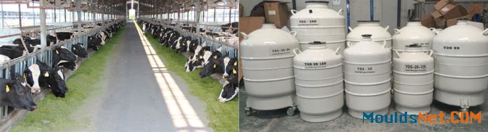 Best selling cryogenic liquid nitrogen co<em></em>ntainer 3L gas cylinder manufacturer in MV